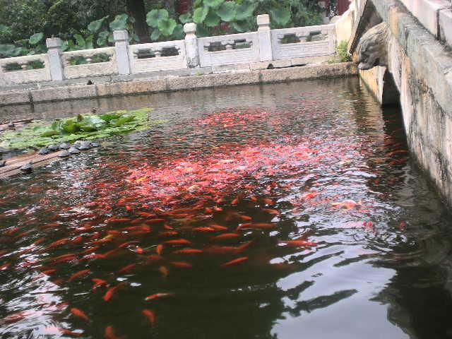 Bassin aquatique piscine naturelle devis en ligne - Amenagement bassin hors sol paris ...